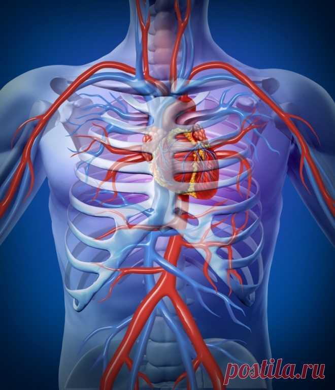 Как самостоятельно проверить здорово ли ваше сердце | Всегда в форме!