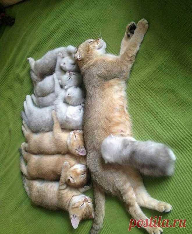 Прикольные картинки для поднятия настроения с котами
