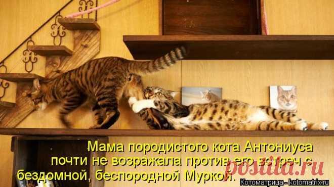 Котоматрица: Мама породистого кота Антониуса  почти не возражала против его встреч...