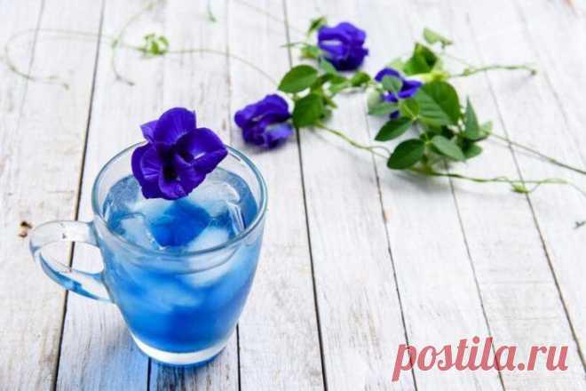 Цветок клитория: полезные свойства, описание