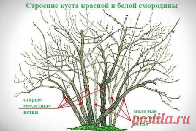 Как подготовить смородиновые кусты к зимовке: основные правила | Рекомендательная система Пульс Mail.ru