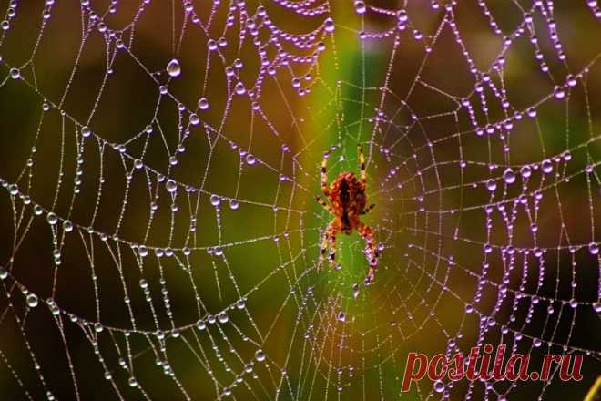 Как начать жить без пауков — Полезные советы