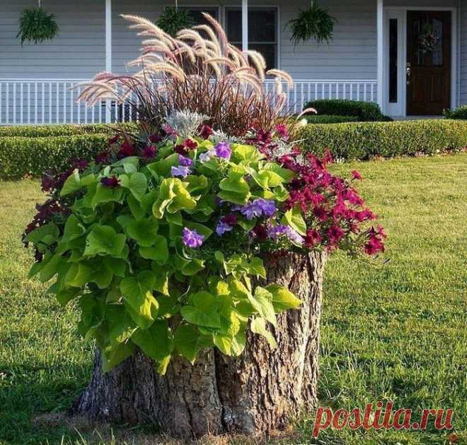 И пни зацветут - изготовить клумбу из старого пня не сложно