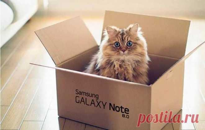 Кот в коробке .   ---    Chronik-Fotos | Facebook