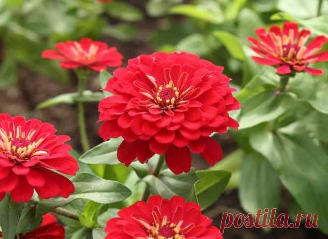 Какие цветы сажать на рассаду в апреле?