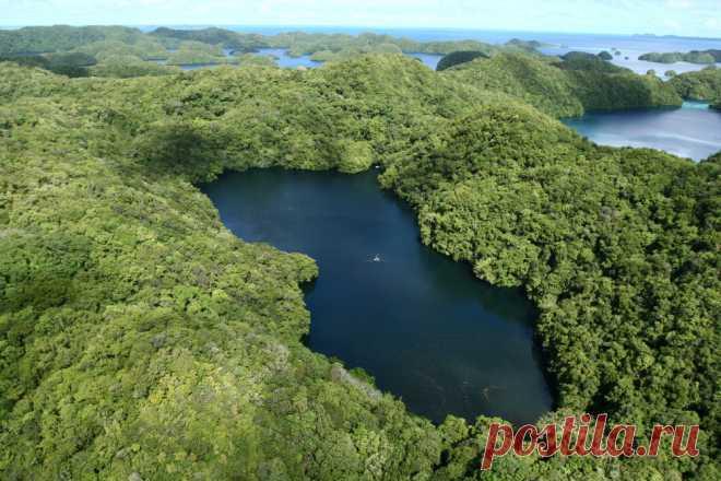 Золотые медузы озера Палау
