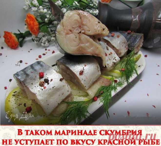 В таком маринаде скумбрия не уступает по вкусу красной рыбе  Ингредиенты: - Скумбрия (замороженная, разморозить) 2 шт - лук репчатый по вкусу - вода 250 мл - гвоздика 6 шт - перец горошком шепотка - перец душистый молотый 1/3 ч л - зерна кориандра шепотка - соль 2 ч л - сахар 0,5 ч л - масло подсолнечное 2 ст л - уксус яблочный 2,5 ст л  Приготовление: 1. Скумбрию почистить, порезать на кусочки. 2. Воду вскипятить, добавить туда соль, сахар, гвоздику, перец горошком и моло...