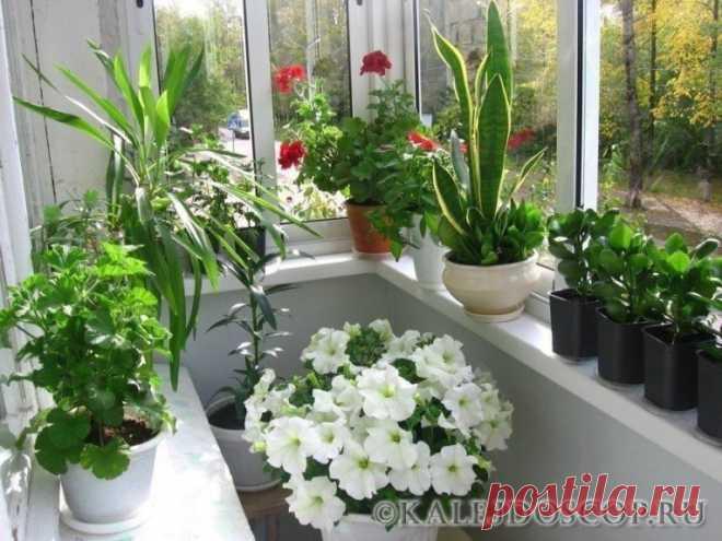 Всего 2 ингредиента — и Ваши комнатные растения будут расти намного лучше — Калейдоскоп