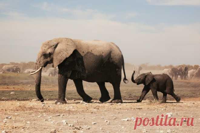 Мамы-животные обучают своих малышей (видео)