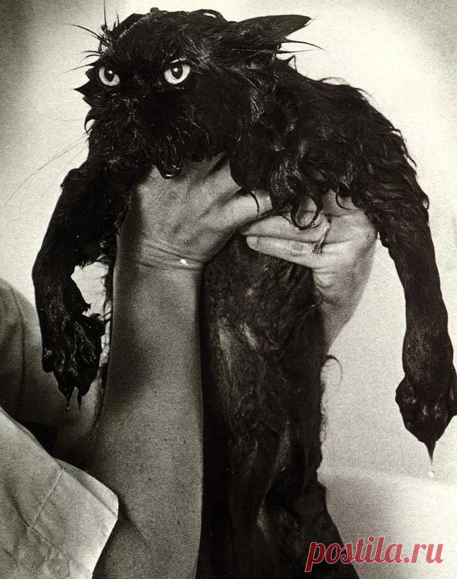 Мокрые котопузики и как они об этом отзываются + тринадцать смешных фото | Лариса Кречетова | Яндекс Дзен