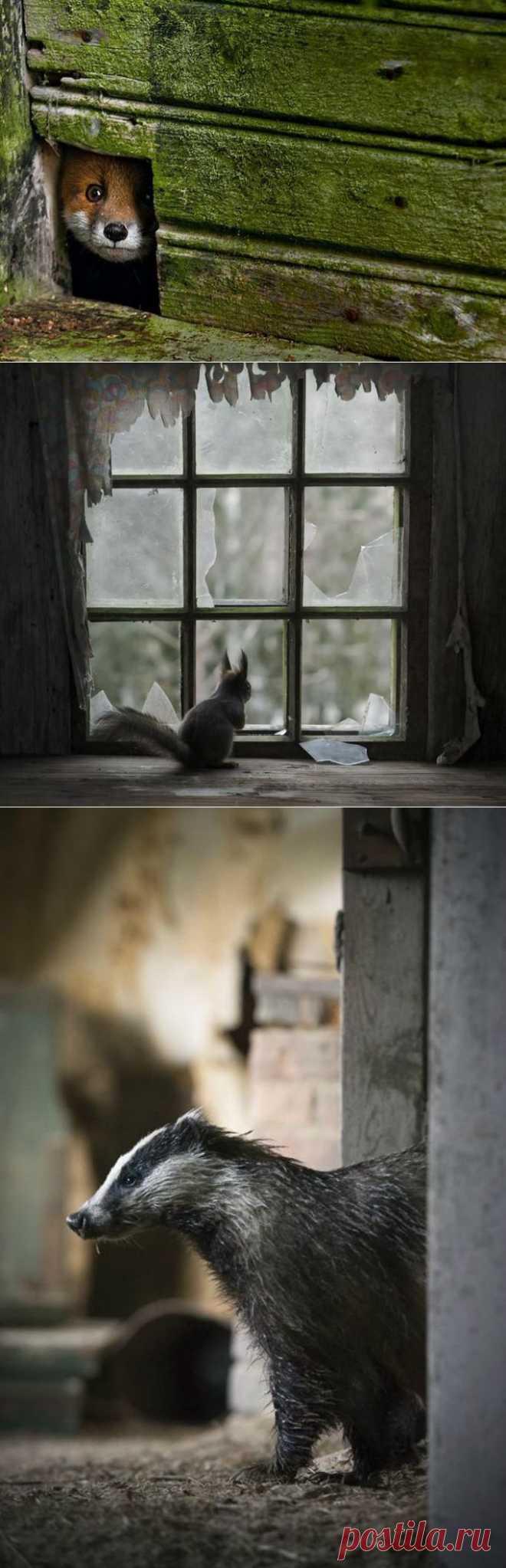 Животные в заброшенных домах (23 фото) - Fishki.Net | Остальные Картинки