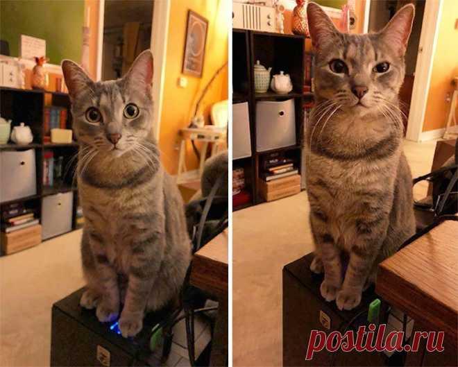 30 фотографий котов-скотов