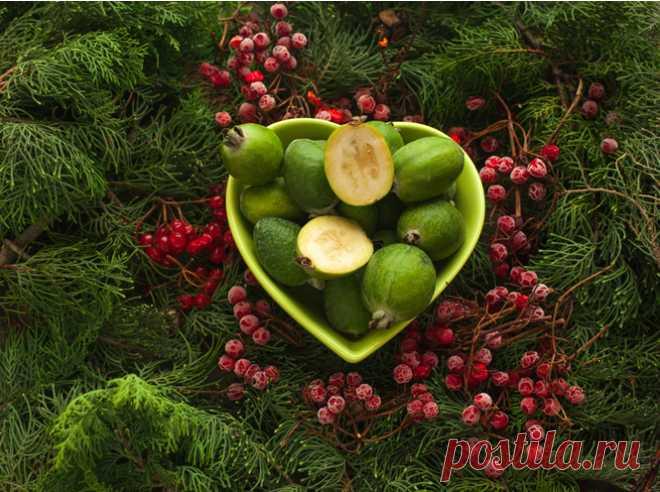 Некрасив, но страшно полезен, или Почему фейхоа называют фруктом вечной молодости Рассказываем все самое интересное о фейхоа: полезные свойства, сорта, правила выбора плодов и что из них можно приготовить. Маленький, неказистый, по внешнему виду фейхоа напоминает мини-авокадо, а по вкусу ─ сочетание клубники с ананасом и гуавой...