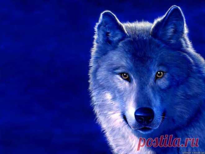 Картинки нарисованных волков - Волки картинки - Фото мир природы