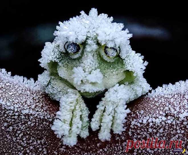 Замороженные лягушки . Чёрт побери