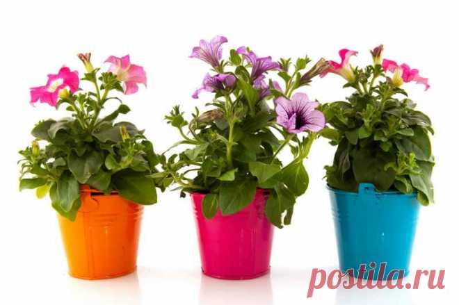 Маленькая хитрость: чтобы цветы в доме цвели пышно и долго | Азбука огородника | Яндекс Дзен