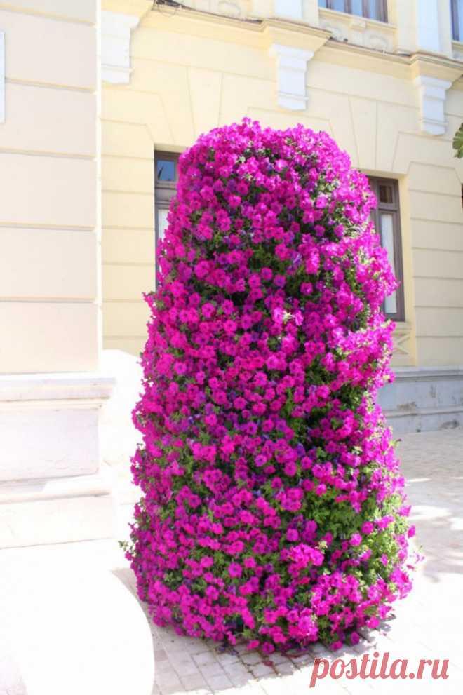 Великолепие петунии: пышная вертикальная клумба в сад | Colors.life