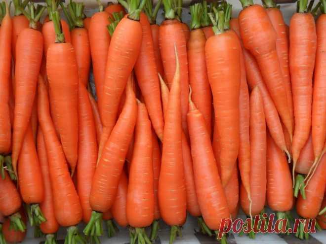 Как получить отличную морковь? Рекомендации специалистов и народный опыт