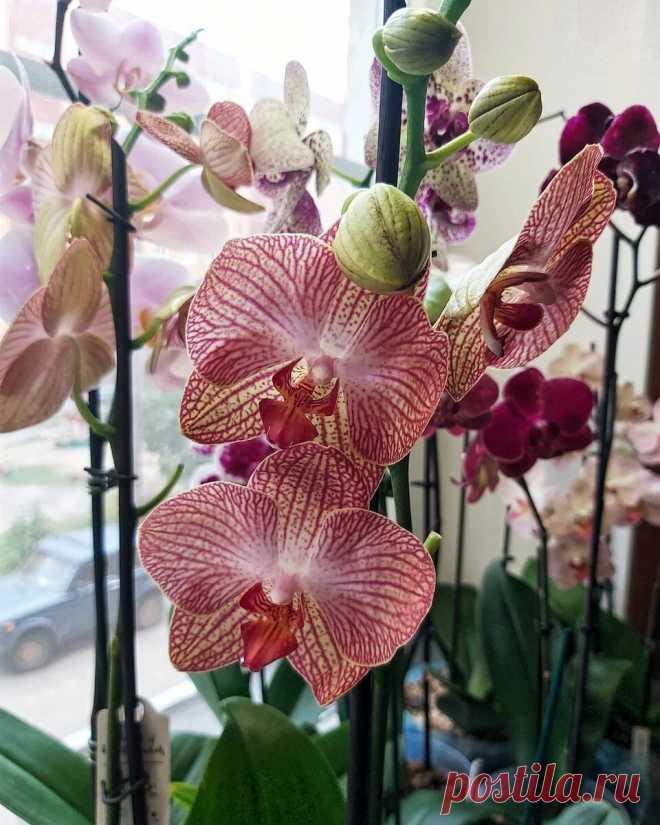 5 простых причин, почему не цветут ваши орхидеи и плохо выглядят   6 соток