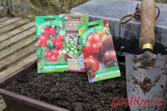 Китайский способ выращивания рассады томатов | Антонов сад - дача и огород | Яндекс Дзен