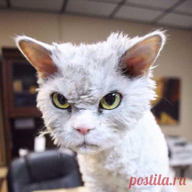 Смешная картинка злой кот