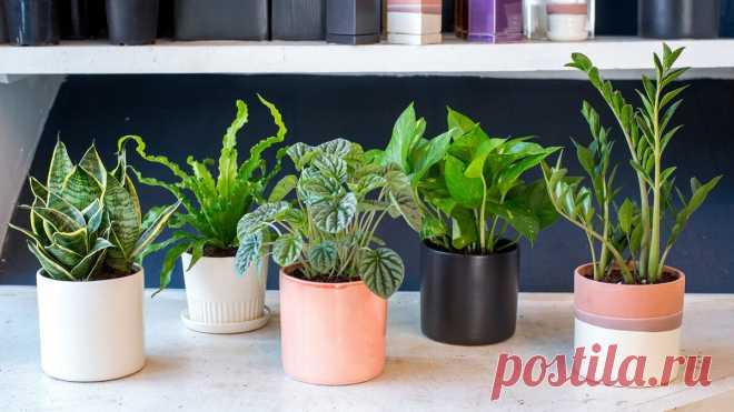 Почему в комнатных растениях появляются мошки и как от них избавиться?