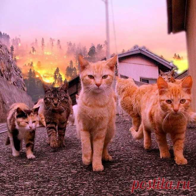 Крутые парни не оборачиваются на взрыв. Пожары и вулканы их тоже не волнуют.