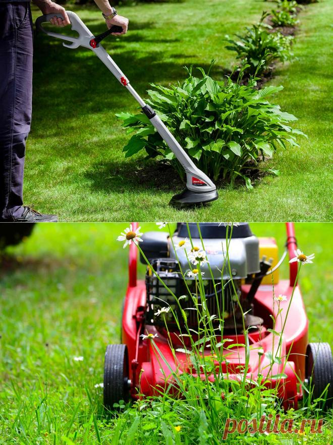 Как правильно выбрать газонокосилку для стрижки газона на дачном участке
