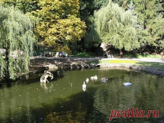 Неподалеку от главных ворот расположен пруд с лебедями