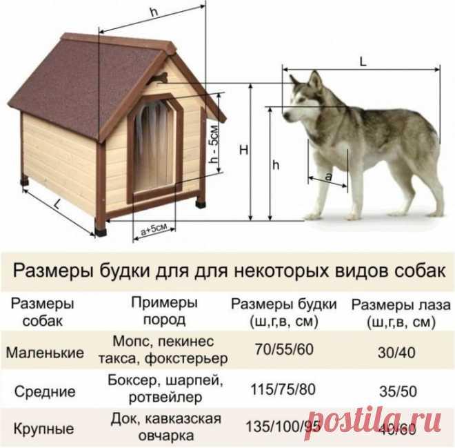 Размеры будок для разных пород собак