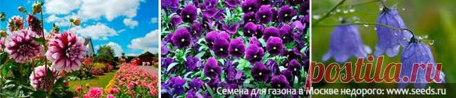 Какие цветы можно сажать в июне в открытый грунт семенами?