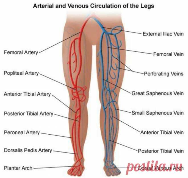 Prevention and treatment of varicosity: 7 councils will improve blood circulation in legs in 20 days | Always in shape!