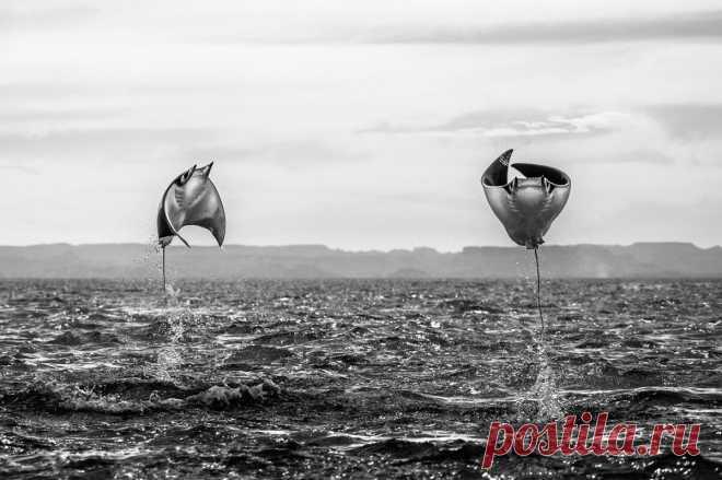 15 лучших подводных фото 2020, которые удивят вас или вызовут улыбку | Российское фото | Яндекс Дзен