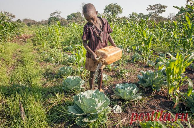 Фотопроект о жизни в Бурунди, второй по бедности страны мира . Чёрт побери