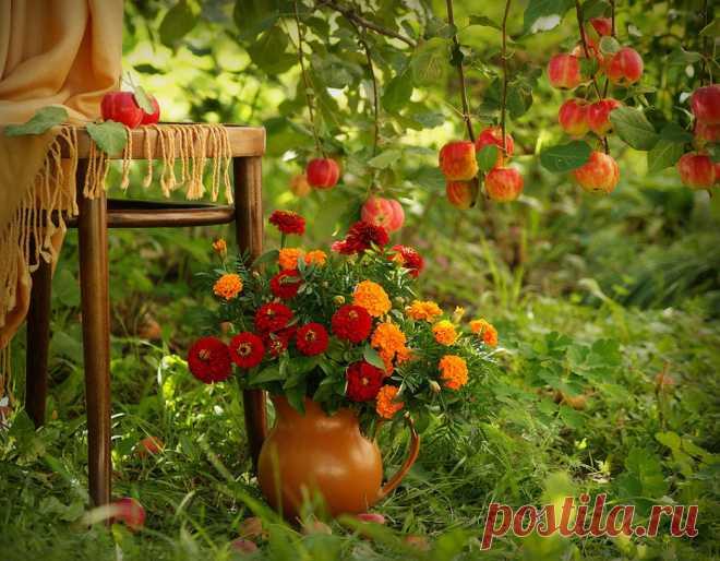 Календарь важных работ в саду и огороде на август  