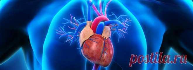 Чтобы моторчик работал исправно. Медики озвучили домашний метод укрепления сердца | Волковыск.BY
