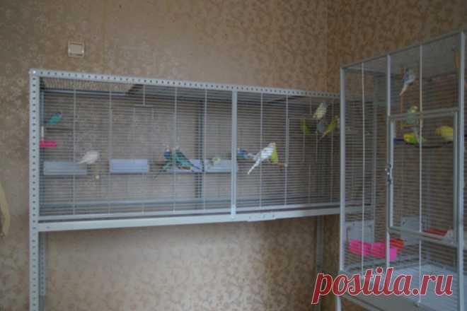 Самостоятельное изготовление клетки для попугая