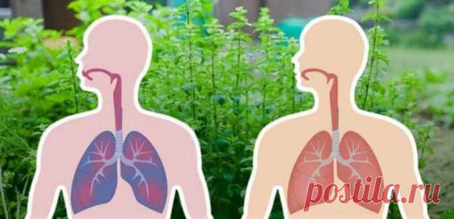7 трав, которые убивают вирусы и слизь в ваших легких    Очень эффективные средства!           Современное общество и образ жизни привели к многочисленным заболеваниям, а антибиотики и лекарства,которыемы используем, еще более опасны и вызывают зависи…