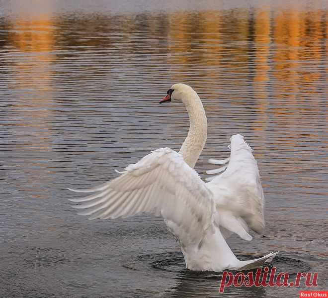 Фото: Утренняя разминка. Alexander Andronik. Фото животных - Фотосайт Расфокус.ру