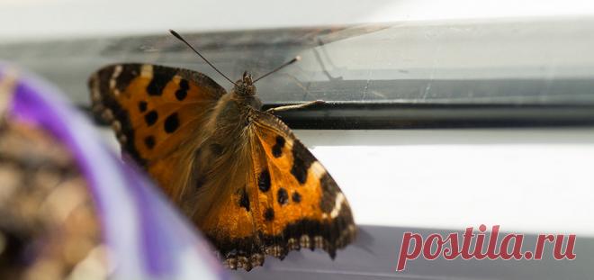 Примета: бабочка залетела в окно, дом, квартиру, на балкон | Приметы на 4-Women.ru