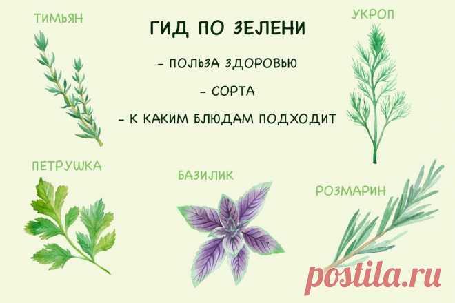 Укроп для желудка, кинза от давления, кервель в салат. Полный гид по зелени!   Fresh.ru домашние рецепты   Яндекс Дзен
