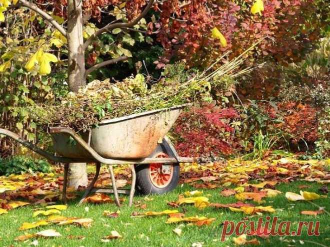 Что сажать в сентябре на даче в открытый грунт На даче работа найдется всегда, весна – посевная рассады овощей и цветов, саженцев плодовых деревьев. Лето – уход за посевами и уборка урожая. Осень – подготовка почвы после освобождения грядок, посев...