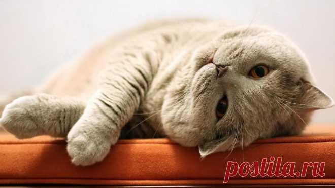 14 способов, как коты демонстрируют свою любовь))