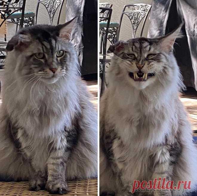 20 смешных котов, которые показали свои зубки, доказав, что они самые милые вампуррры Они сначала ластятся, дают себя погладить, а затем свирепеют и кусаются — мы сейчас говорим о наших любимых кошках, а не о диком животном из леса. Хотя кошки уже давно одомашнены, у них все еще остает...