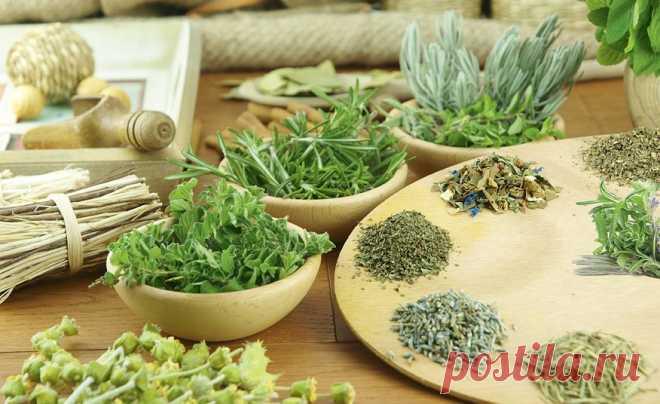 Эффективные мочегонные средства для похудения дома