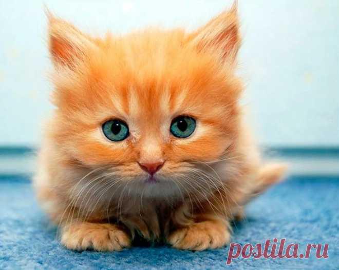 Надписями предательстве, открытки смешные котята