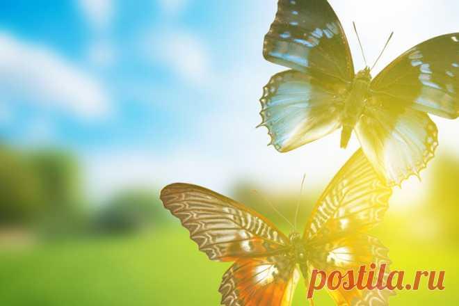 Основные заблуждения о бабочках В настоящее время учёными описано более 158 тысяч чешуекрылых. Предполагается, что до 100 тысяч видов остаются всё ещё не известными науке. После двухсот лет изучения бабочек исследователи так и не могут объяснить причудливость их окраски …