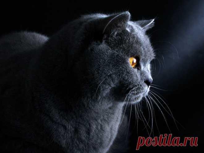 Los gatitos-murkotiki