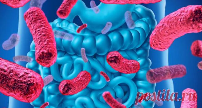 Как восстановить микрофлору кишечника и уберечь себя от болезней