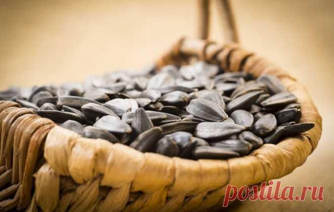 Семена подсолнуха польза и вред для мужчин и женщин